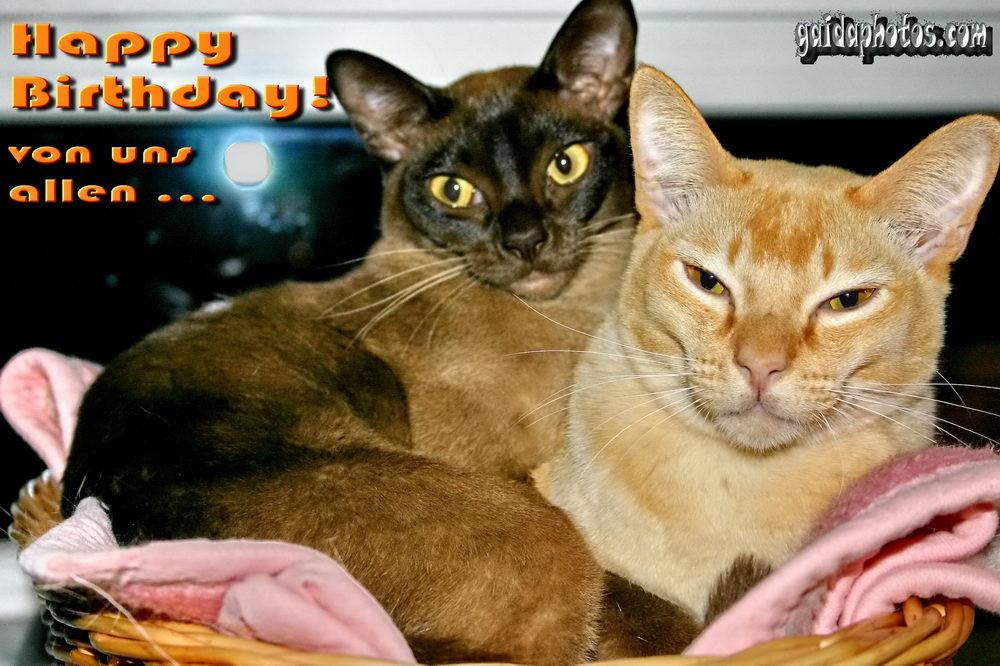 Katzen Geburtstagsbilder  Katzen Archive gaidaphotos Fotos und Bilder