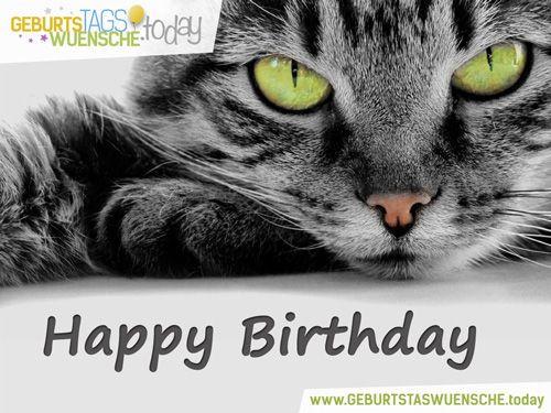 Katzen Geburtstagsbilder  Tierische Geburtstagsgrüße