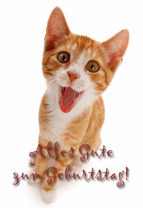 Katzen Geburtstagsbilder  Geburtstagsbilder Katzen