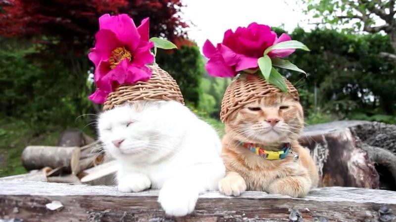 Katzen Geburtstagsbilder  Katzen Bilder Sie zum Lachen bringen Haustiere