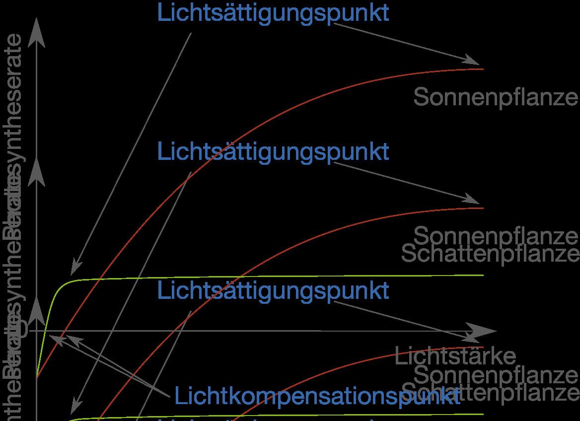 Licht Und Schattenblatt  synthese Stoffwechsel Bio Digitales Schulbuch