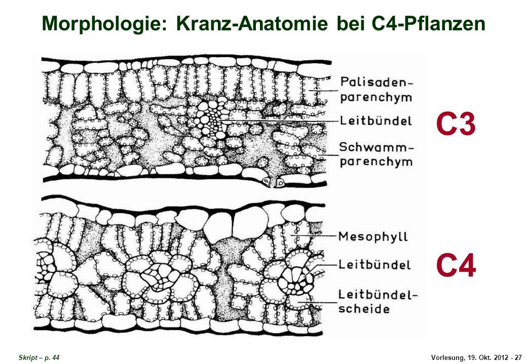 Licht Und Schattenblatt  Gesamttitel Ökophysiologie ppt video online herunterladen