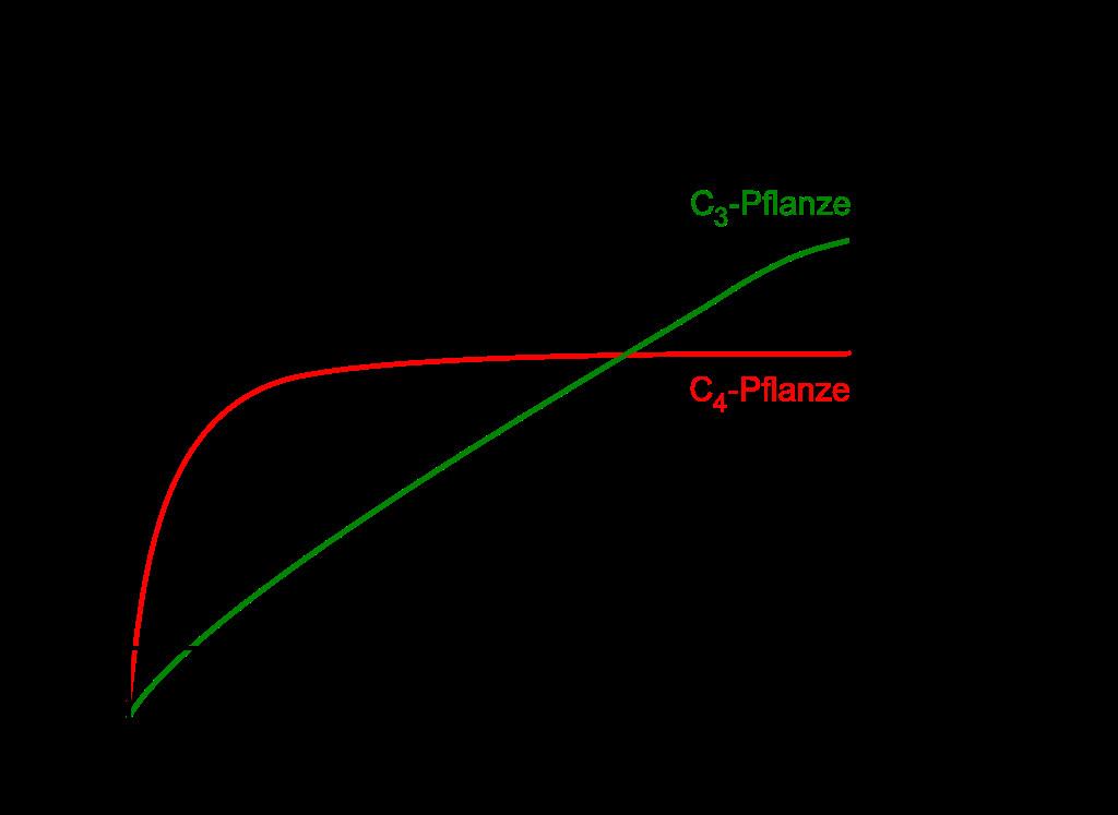 Licht Und Schattenblatt  Datei synthese CO2 Konzentrationg –