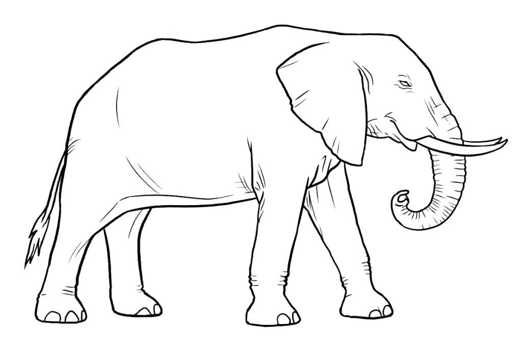 die besten malvorlagen elefant - beste wohnkultur