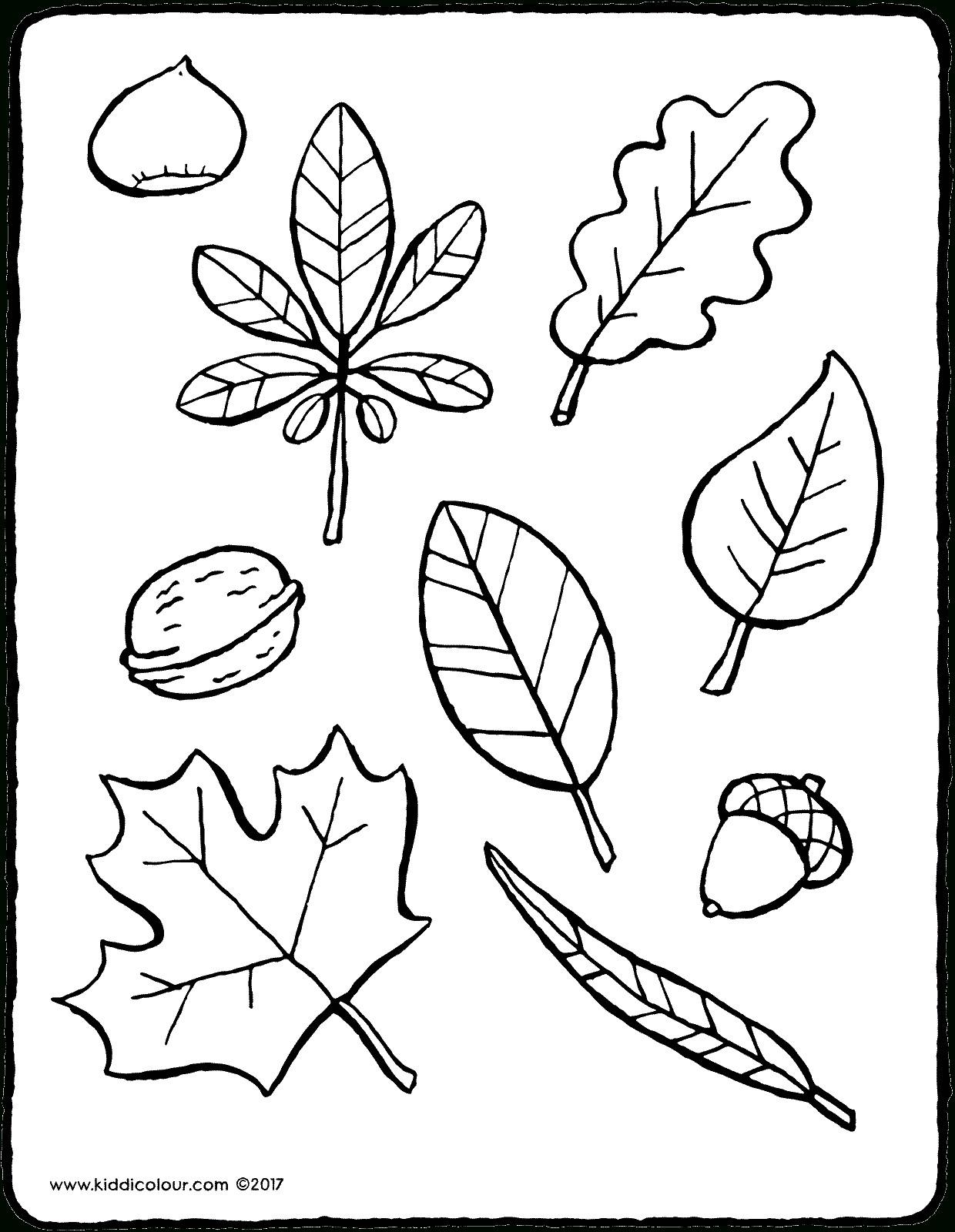 beste 20 malvorlagen herbstblätter  beste wohnkultur