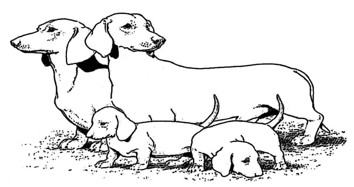 20 besten malvorlagen hunde  beste wohnkultur