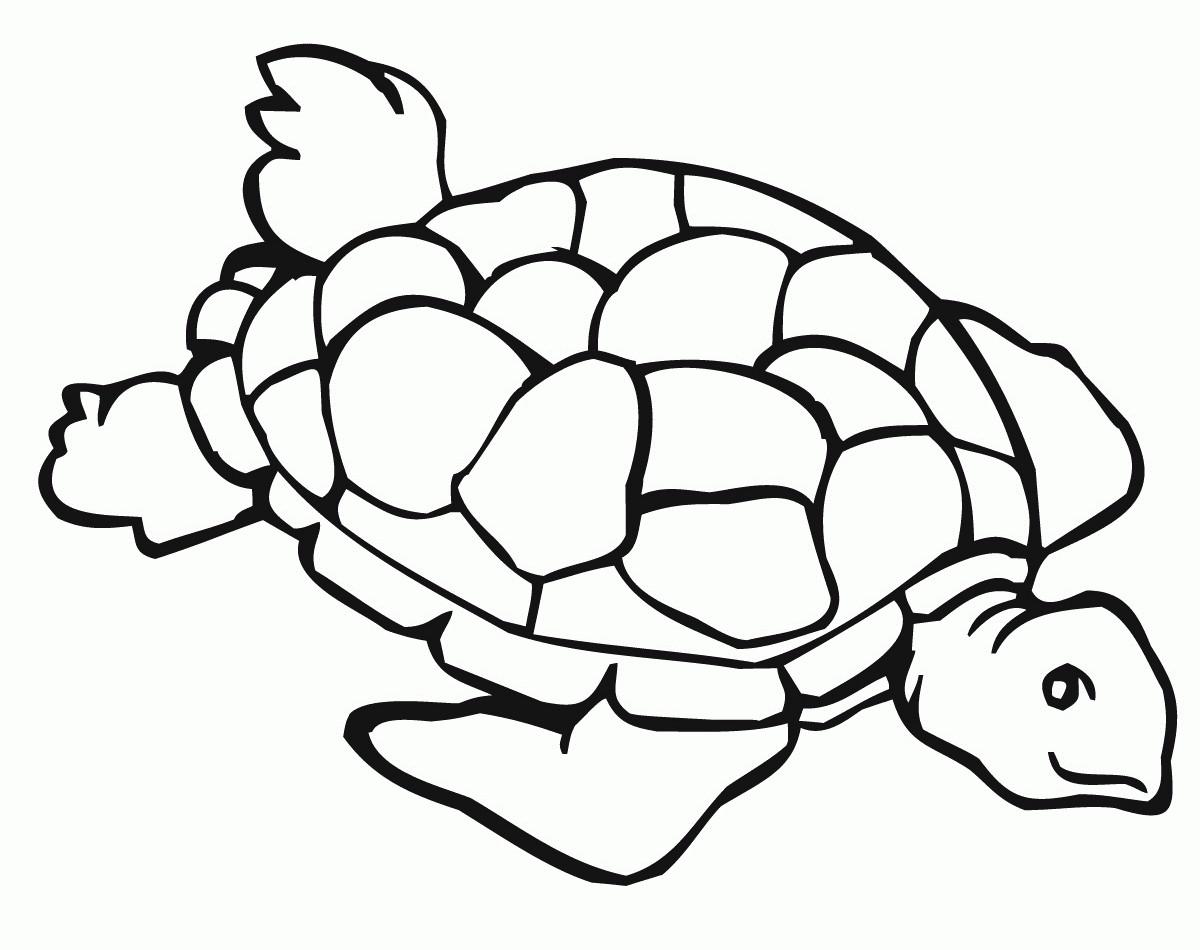 die 20 besten ideen für malvorlagen schildkröte - beste