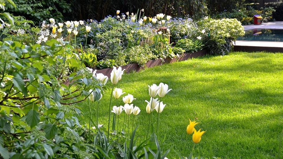 Mdr Garten  Rasen anlegen düngen und richtig pflegen