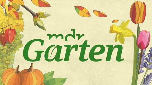 Mdr Garten  MDR Fernsehen