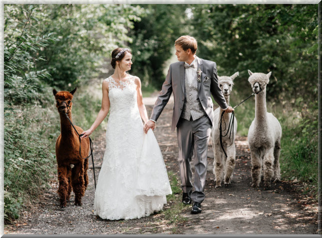 Alpaka Hochzeit  alpaka hochzeit kinder