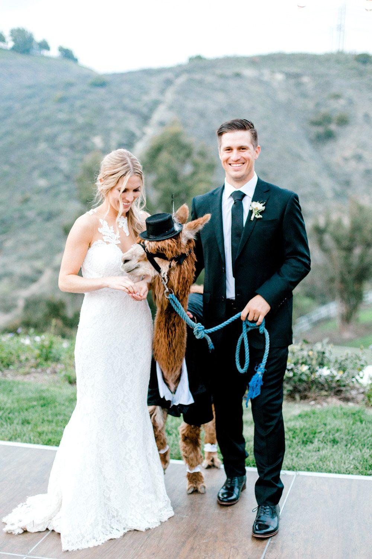 Alpaka Hochzeit  Liebenswerte Hinterhof Hochzeit mit einem schneidigen