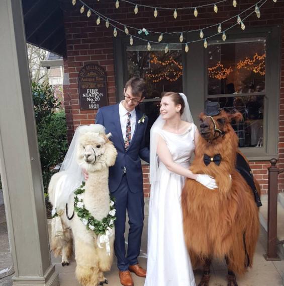Alpaka Hochzeit  Hochzeit mit Lamas RTL II News