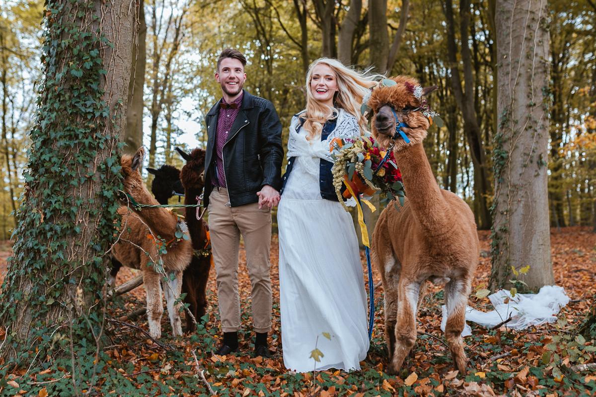 Alpaka Hochzeit  Spaziergang mit Alpaka auf der Hochzeit monaberg