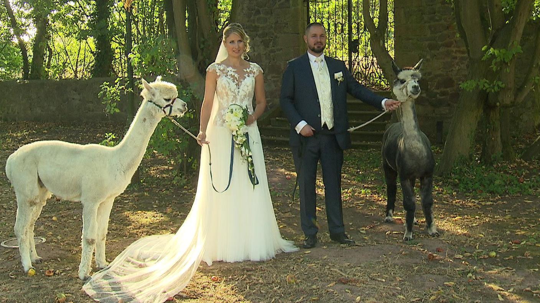 Alpaka Hochzeit  Alpaka Wedding Flauschiger Hochzeits Trend aus Amerika