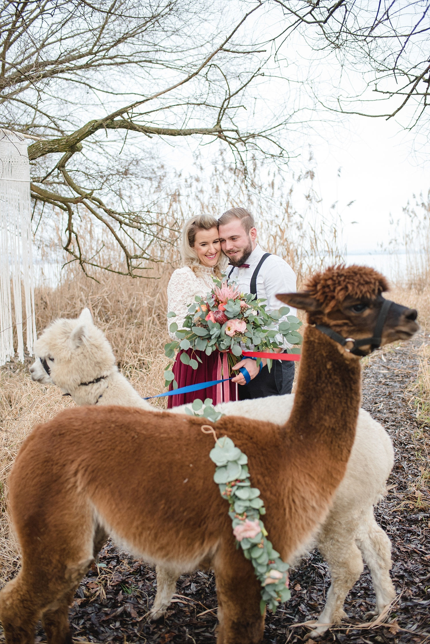 Alpaka Hochzeit  Alpaka Hochzeit