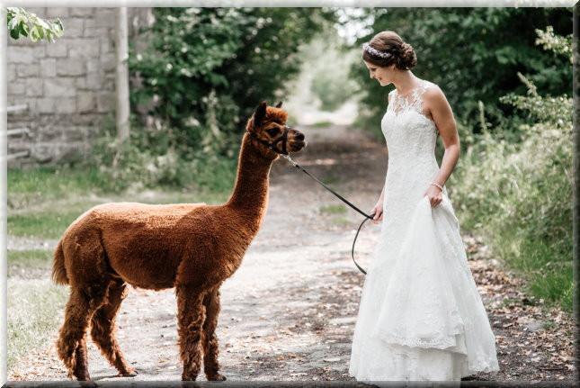 Alpaka Hochzeit  alpaka smileyeyes kinder