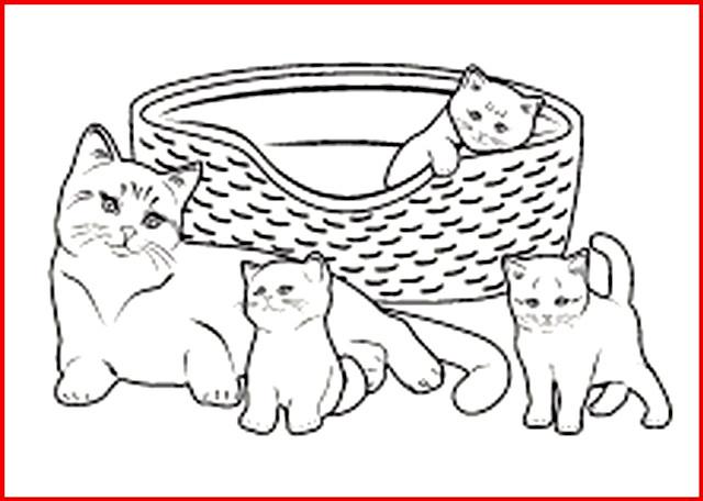 die besten ausmalbilder baby katzen - beste wohnkultur