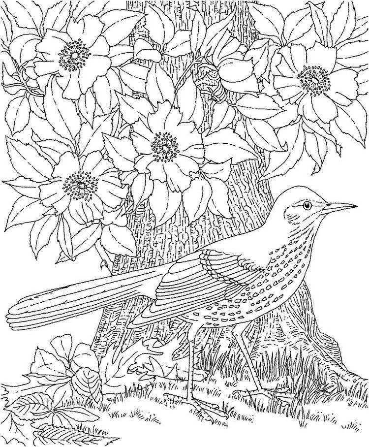 Ausmalbilder Erwachsene Natur  ausmalbilder erwachsene natur umwelt malvorlage vogel