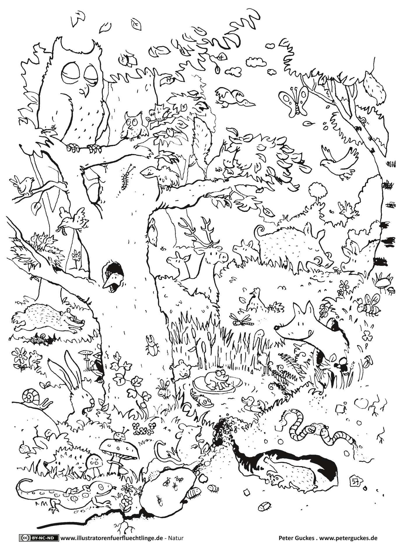 Ausmalbilder Erwachsene Natur  Natur Wald Tiere Guckes