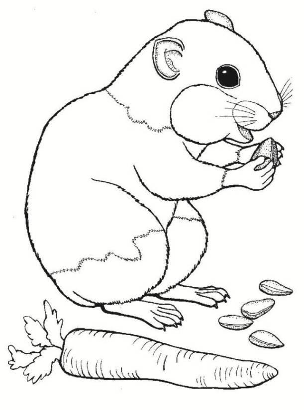 20 besten ausmalbilder hamster  beste wohnkultur