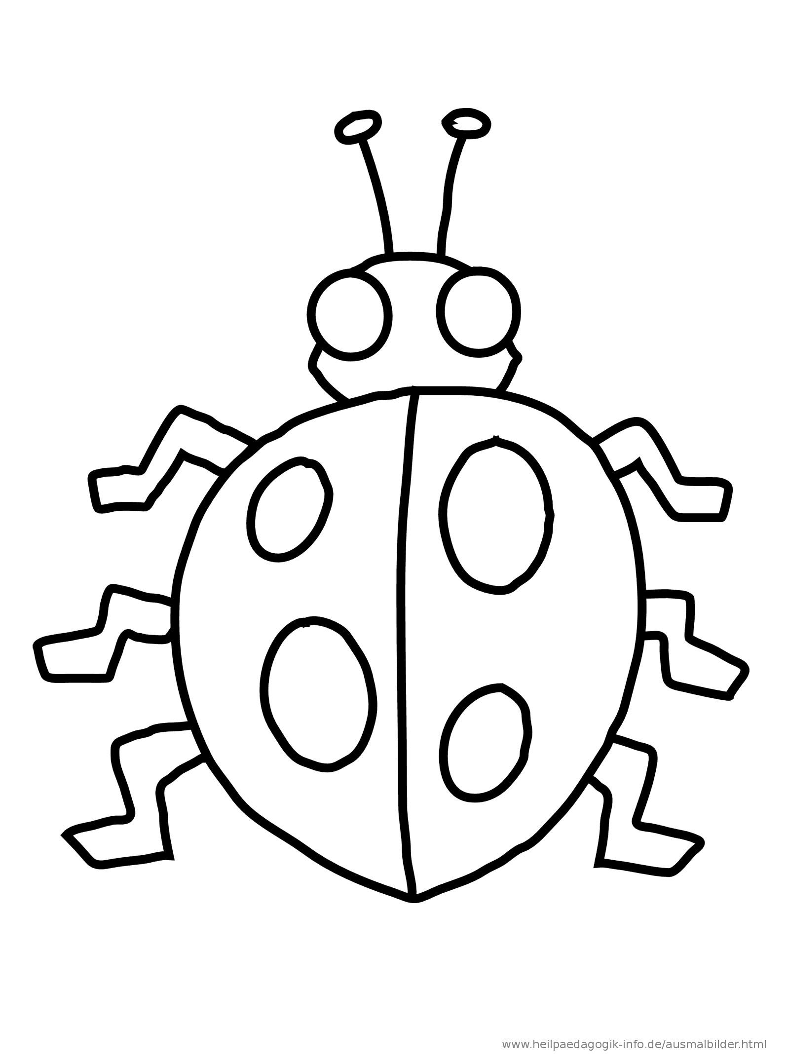die 20 besten ideen für ausmalbilder käfer - beste