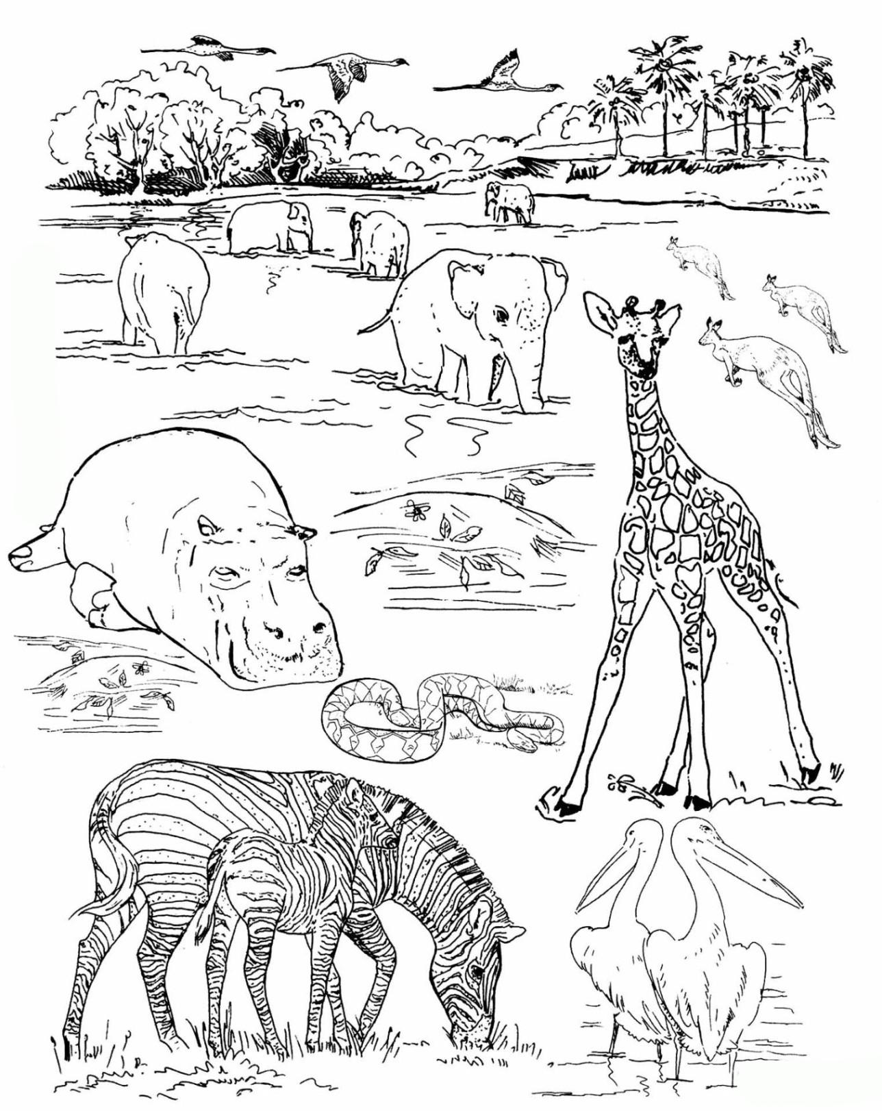 Ausmalbilder Tiere Zoo  Malmichaus Ausmalbild Malvorlage Zoo 1 Ausmalbilder