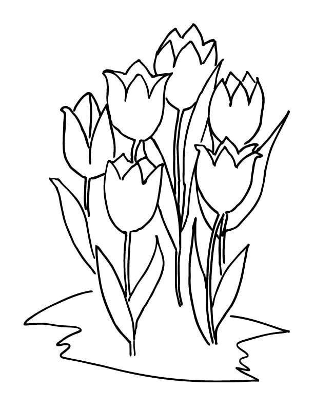 die besten ausmalbilder tulpen  beste wohnkultur