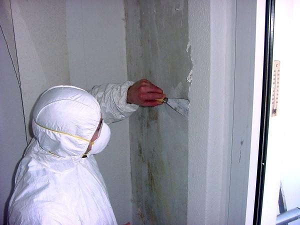 Bagatellschaden Wohnung  Gefährdungsbeurteilung bei Schimmelpilzbefall