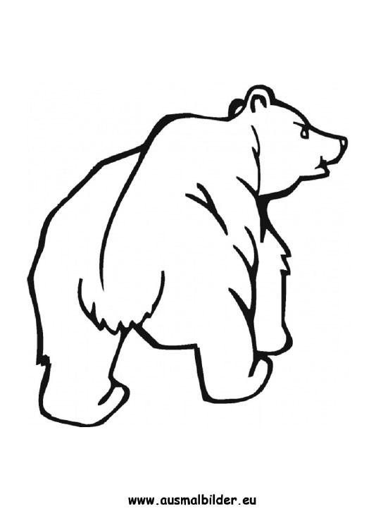 Bären Ausmalbilder  Ausmalbilder Bär Bären Malvorlagen