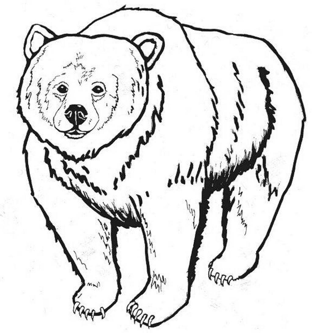 Bären Ausmalbilder  Bären malvorlagen kostenlos zum ausdrucken Ausmalbilder