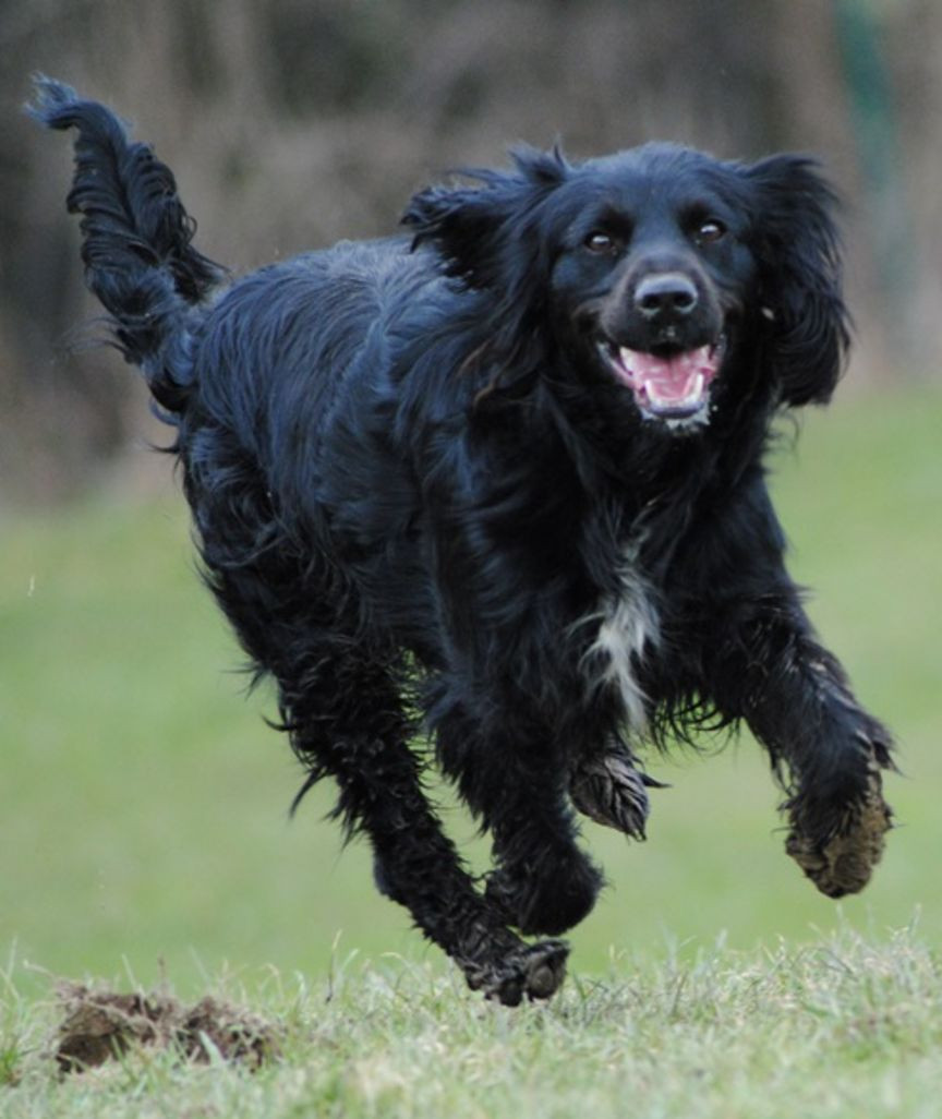 Cocker In Not Suchen Ein Zuhause  Tierheimhunde vom Sonnenhof suchen ein neues Zuhause Koby