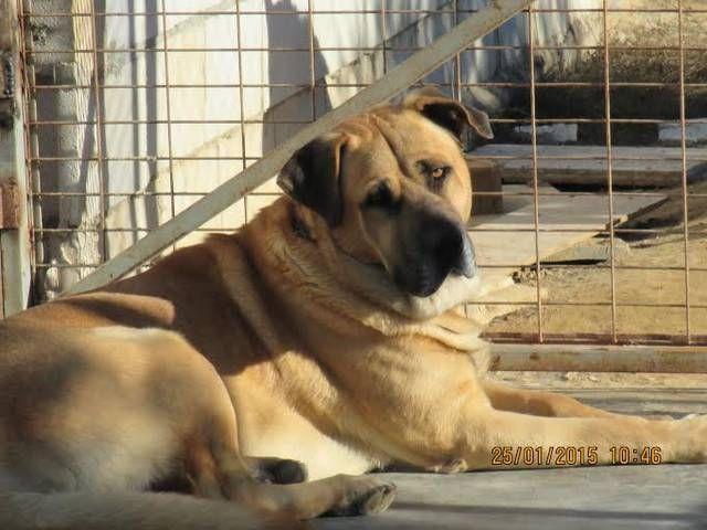 Cocker In Not Suchen Ein Zuhause  66 besten Hunde in Not suchen ein Zuhause Hundevermittlung