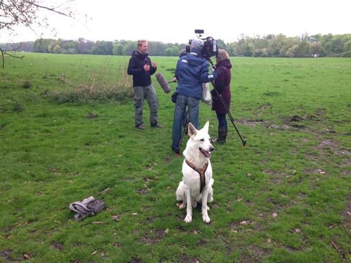 Cocker In Not Suchen Ein Zuhause  Rudelberater Hundeschule und Hundetraining in Köln
