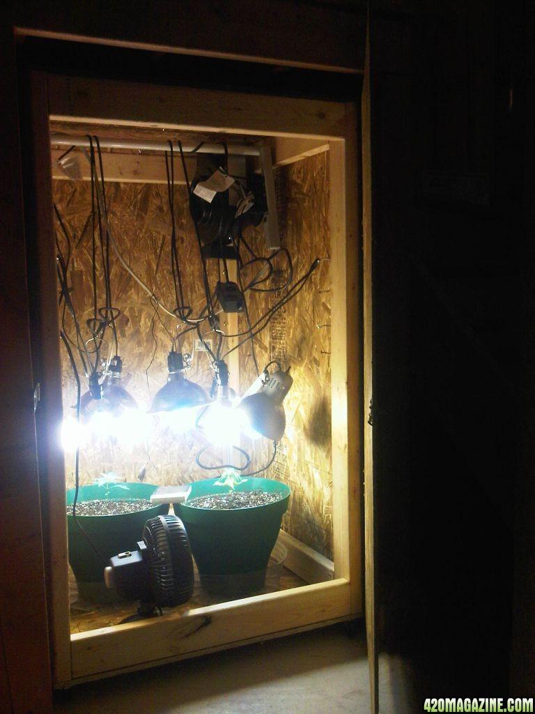 Diy Growbox  Scop s First Grow Under Stair CFL DIY Grow Box In Soil