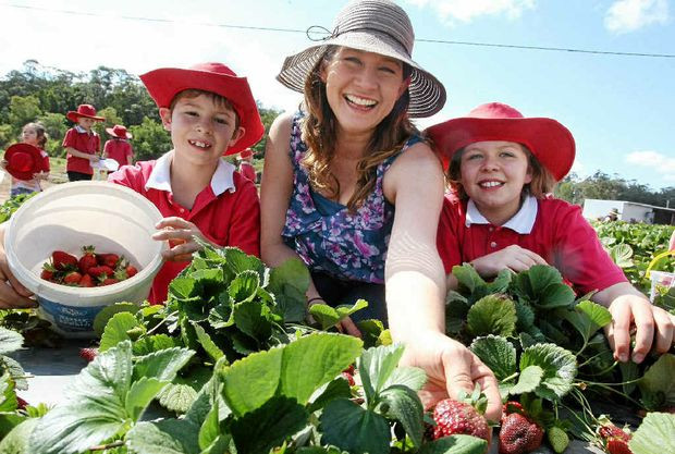 Fiona Hauser  Take your pick at Strawbfest