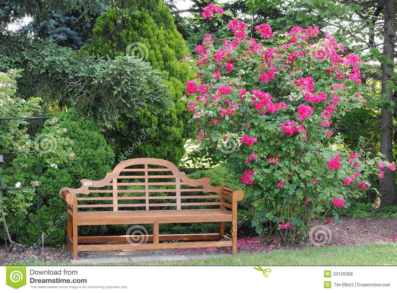 Garten Bank  Rosenbusch Und Eine Garten Bank Stockfoto Bild von busch