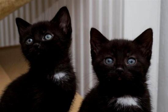 Haus Zu Verschenken  Haus Katzenbabys Zu Verschenken
