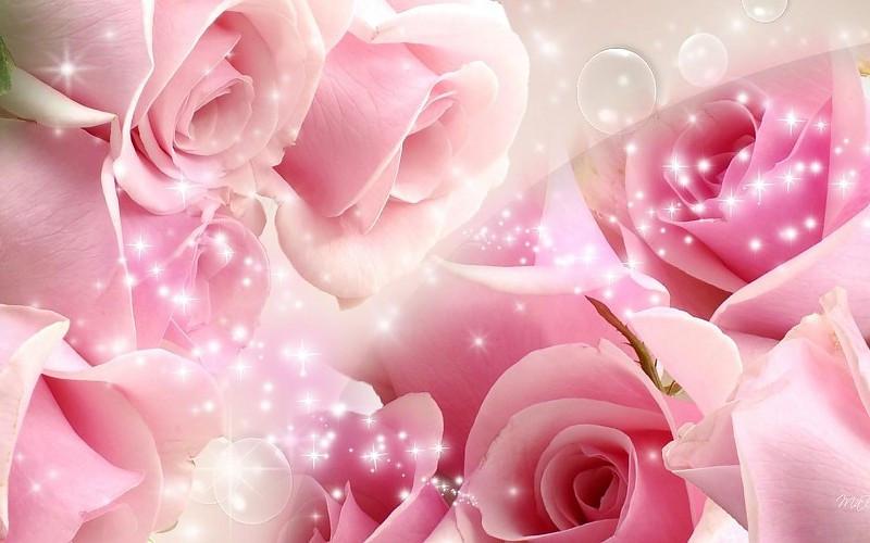 Hintergrundbilder Hochzeit  Rosa Hochzeit mit großem Bildschirm Hintergrundbilder