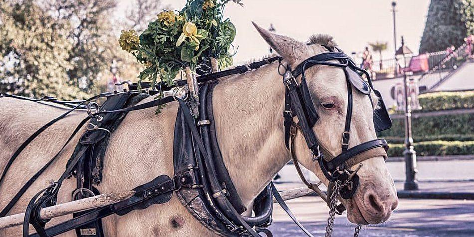 Kutscherspiel Hochzeit  Die besten Hochzeitsspiele für Brautpaare & Gäste