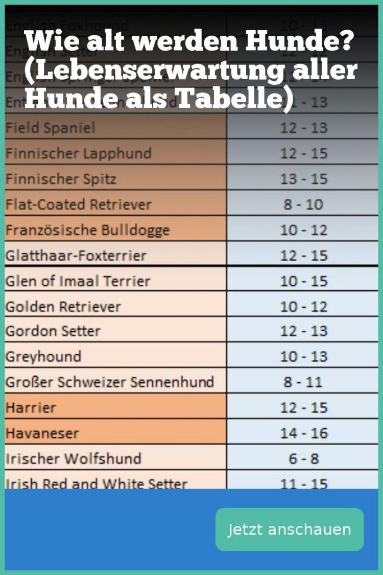 Lebenserwartung Hunde Tabelle  5 Fakten zu Wie alt werden Hunde