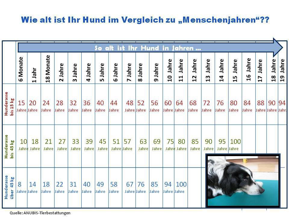 Lebenserwartung Hunde Tabelle  Der geriatrische Hund