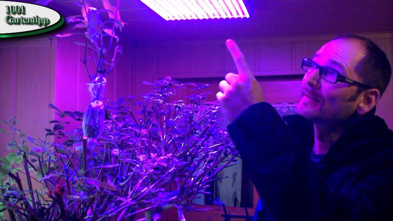 Led Grow Lampe  Gartentipp Februar 0212 LED Grow Lampen für Jungpflanzen