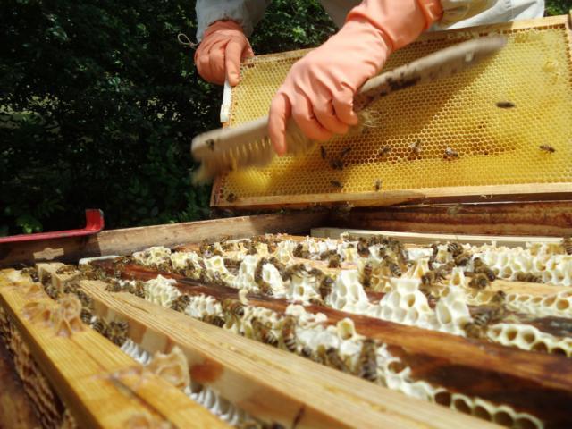 Lüdecke Amberg  Verein 2016 Bienenzuchtverein Sulzbach Rosenberg 1871