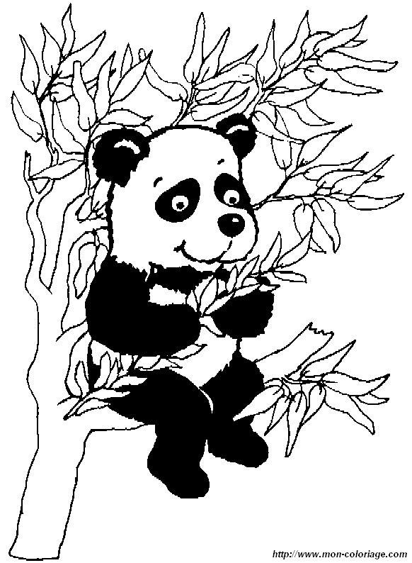 Panda Ausmalbilder  Ausmalbilder Panda bild panda1