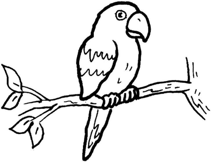 Papagei Ausmalbilder  Vorlagen zum Ausmalen Malvorlagen Papagei Ausmalbilder 3