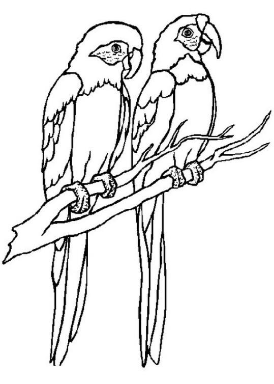 Papagei Ausmalbilder  Ausmalbilder für Kinder Papagei 10