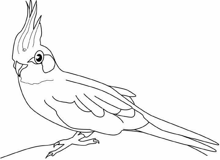 Papagei Ausmalbilder  Ausmalbilder Malvorlagen – Papagei kostenlos zum