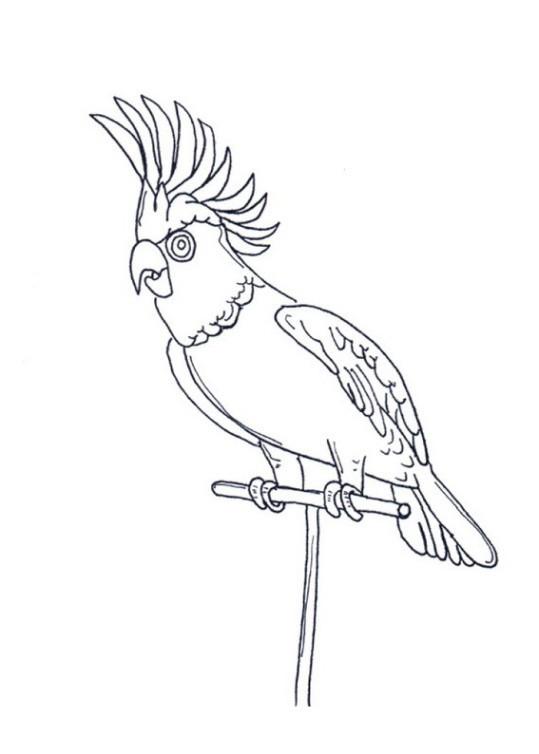 Papagei Ausmalbilder  Ausmalbilder papagei kostenlos Malvorlagen zum