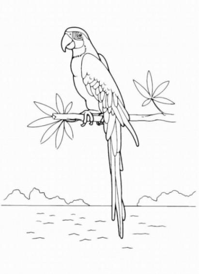 Papagei Ausmalbilder  Malvorlagen zum Ausmalen Ausmalbilder Papagei gratis 3