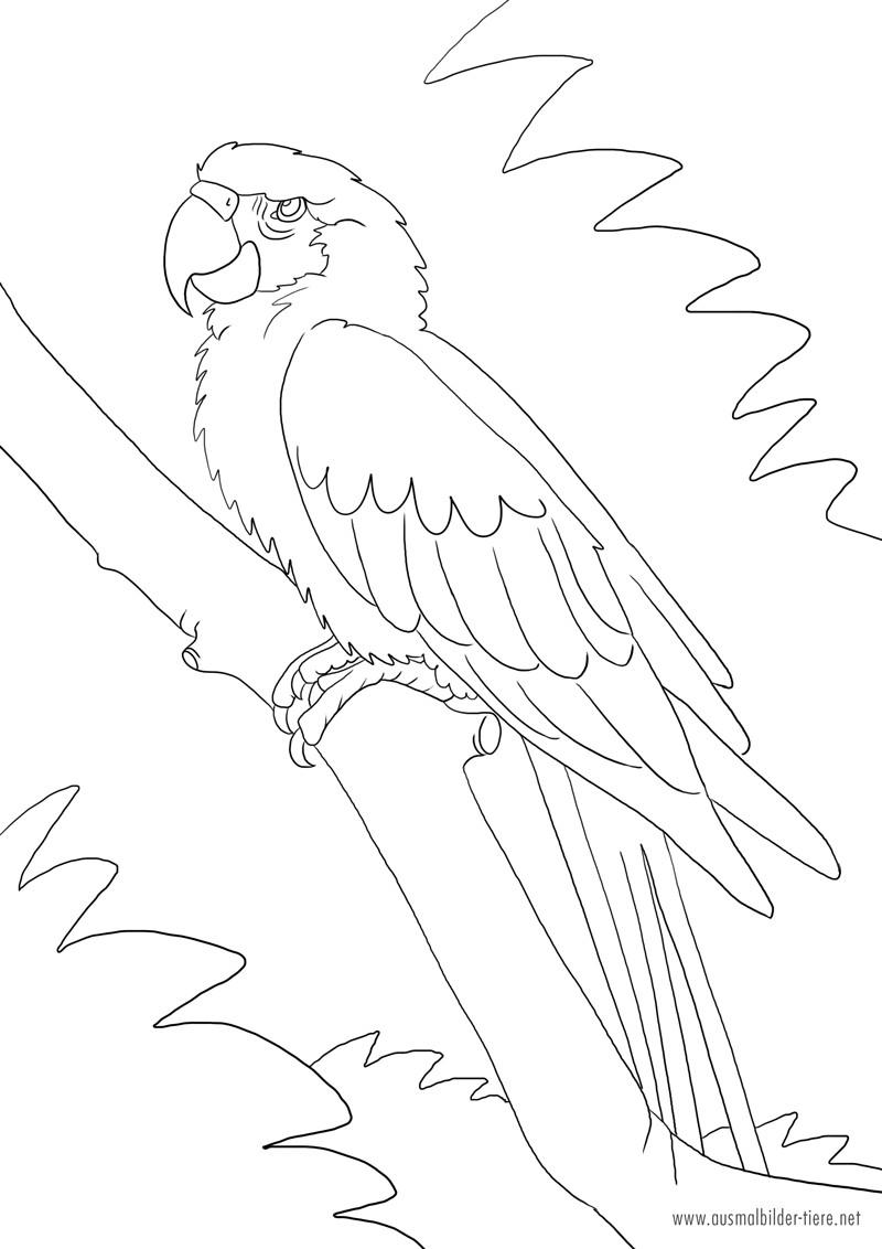 Papagei Ausmalbilder  Papagei Zum Ausmalen